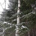 森のさんぽ  DSC02452