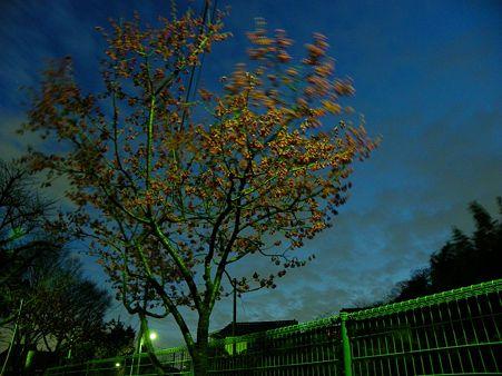 梅の花 2つめ