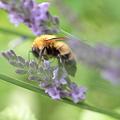 Photos: ミツバチの夢