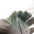 写真: 指を作る2