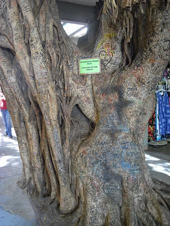 インターナショナル・マーケット・プレイスの木