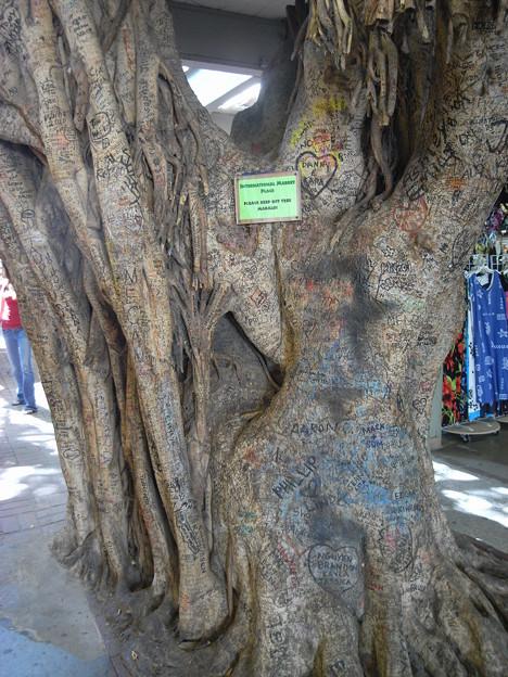 写真: インターナショナル・マーケット・プレイスの木