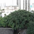 写真: インターナショナル・マーケット・プレイスの樹木