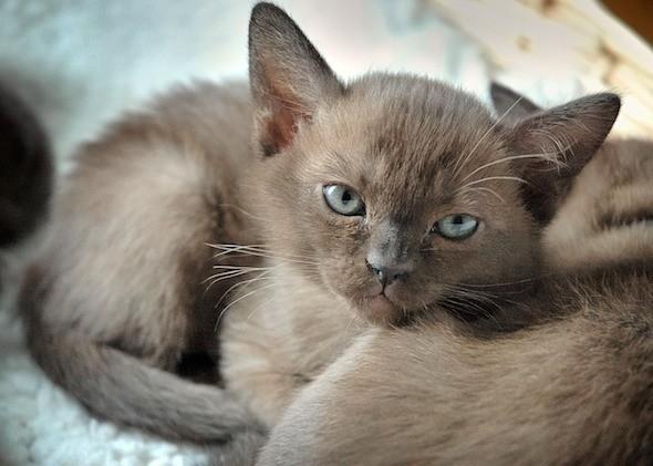 kitten1018