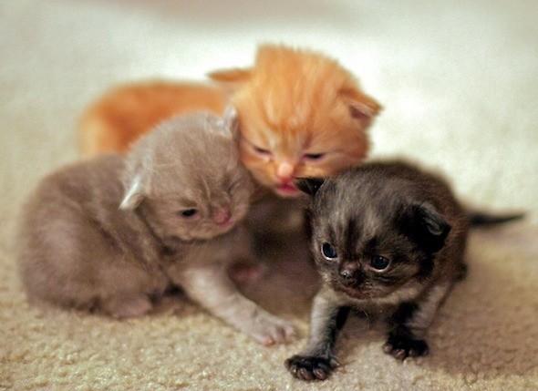 kitten1044_04