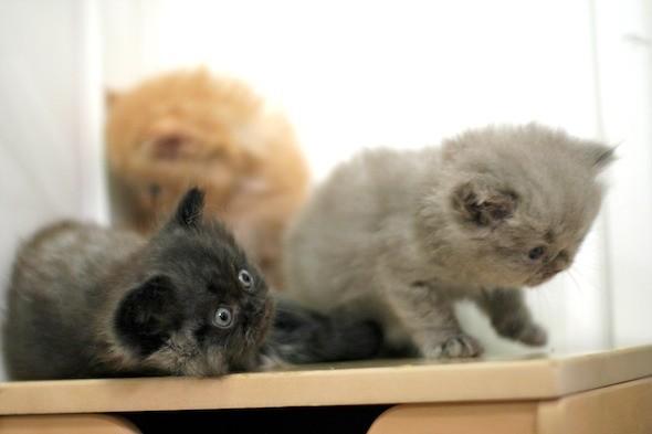 kitten1044_14