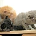 Photos: kitten1044_14