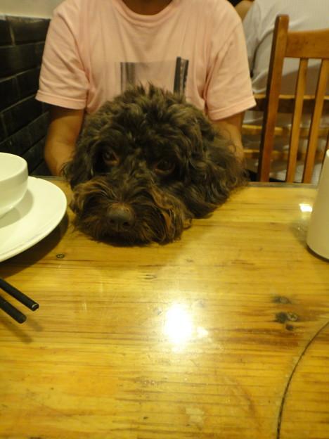 テーブルの上に頭をのっけるMOMO