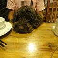 写真: テーブルの上に頭をのっけるMOMO