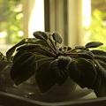 写真: 実家の植物