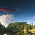 写真: 空魚