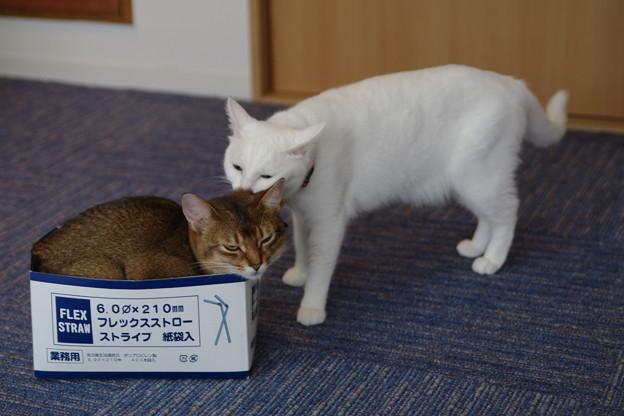 Photos: ぺろぺろ