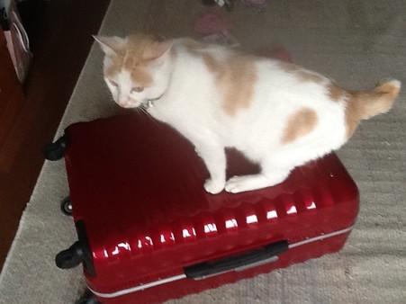 ねこonざ スーツケース