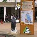Photos: 20100704 上野 コウテイ親子01
