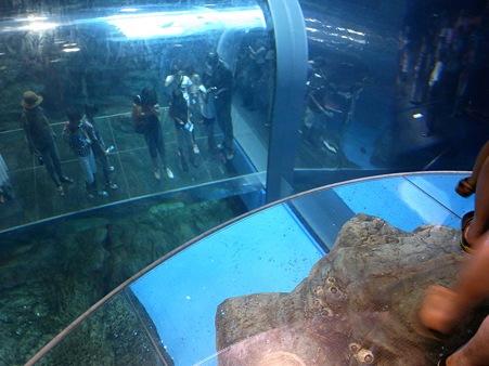 20110815 海響館 亜南極水槽03