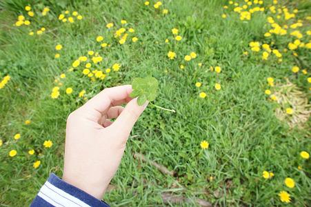 5つ葉のクローバー