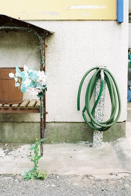 ホースと偽の花