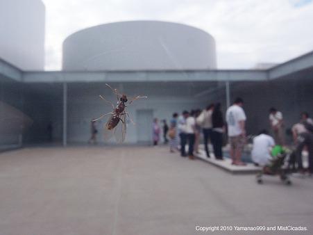 ハチ目の一種