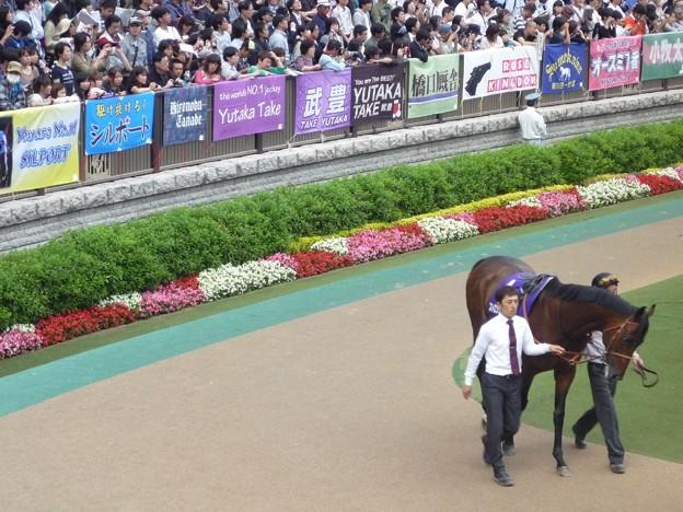 Photos: 2012安田記念 ストロングリターン