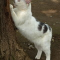 公園猫 2014.6.26?