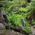 Photos: 西禅院庭園
