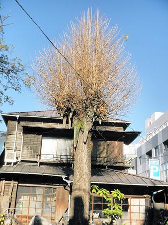 乳銀杏 2010年12月27日_PC270258