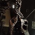 Photos: ガオー。カックいい恐竜。