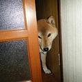入ってもええん?