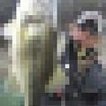 Photos: バリソンミノー130にて