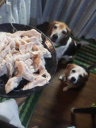 蒸し鶏出来上がり~!つまみ食いしたら美味しかった!