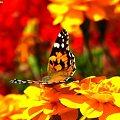写真: 赤とオレンジ