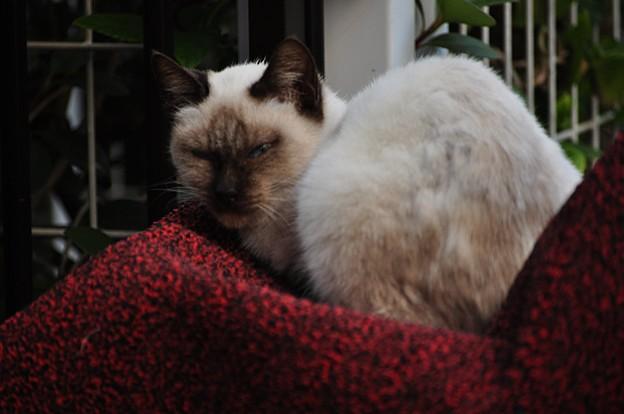 怒れる猫_DSC_3316