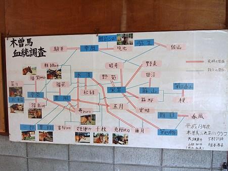 木曽馬の家系図
