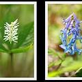 野草の花たち~P1