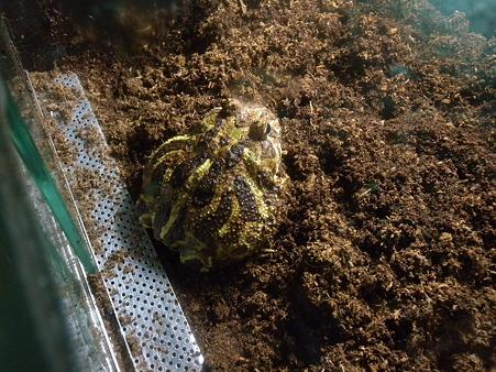 水浴び後のカエル