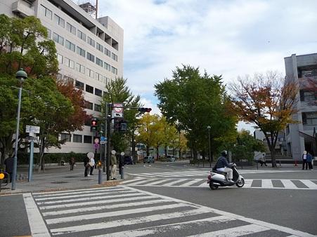 101119-紅葉 山下公園通り (2)