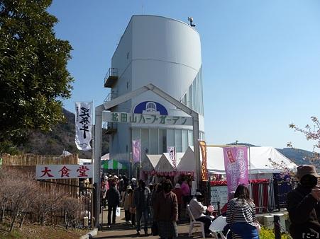 110305-松田山 河津桜 (113)