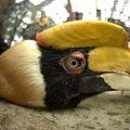 Photos: 頭にスイートポテトのっけた鳥