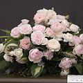 国バラ切花