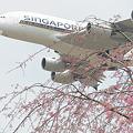 春のうららのA380