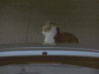 闇夜ネコ2