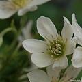 写真: 201104flower 796