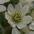写真: 201104flower 801