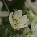 写真: 201104flower 802
