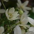 写真: 201104flower 803