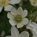 写真: 201104flower 804