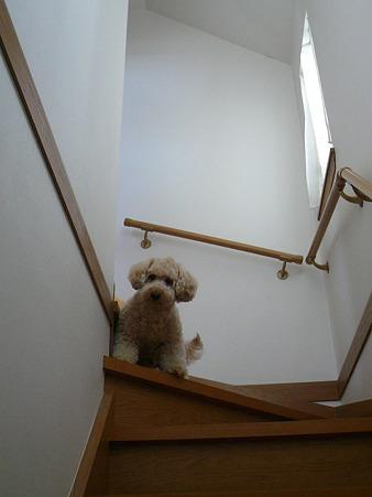 階段が降りれないくーかい 3