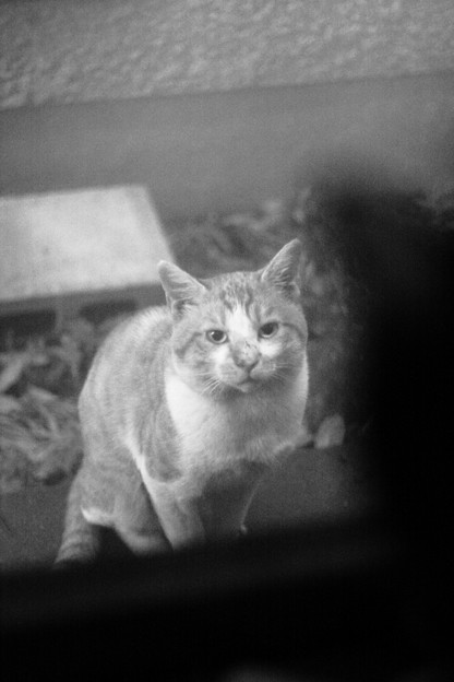写真: 真面目な茶色猫
