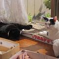 写真: 猫さまは和む