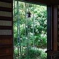 Photos: 2012.06.06 鎌倉 長谷寺 経蔵から若竹と紫陽花